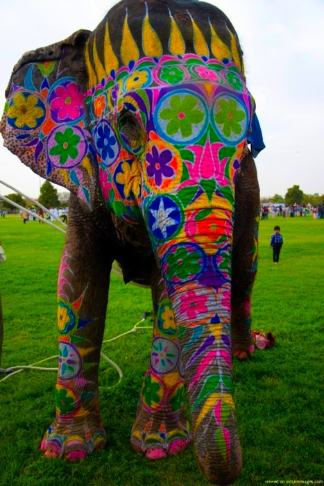 Painted Elephant - vibrant colors and patterns